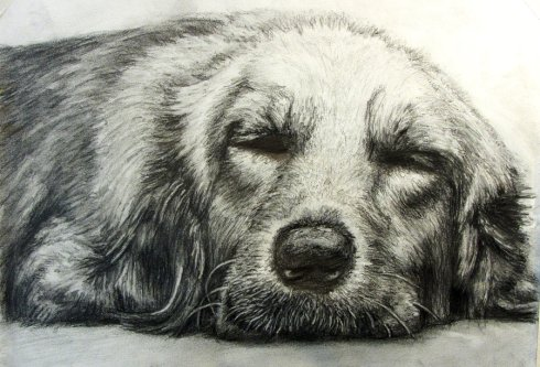 let_sleeping_dogs_lie_by_baad_artist-d4twith