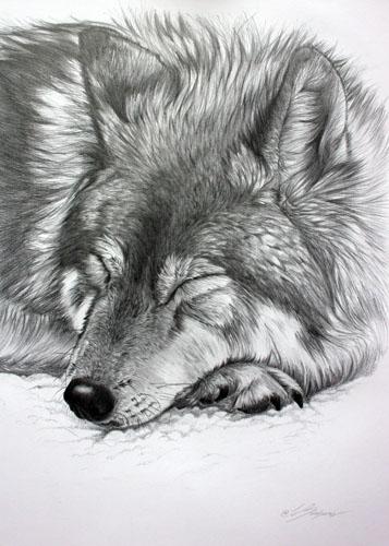 sleeping_wolf_4a648612332bb